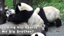 Is Xing Hui Really My Big Brother?  | iPanda