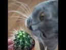 мару и кактус