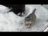 Манул-007 в чём-то заподозрил снег