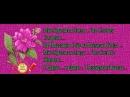 Doc308355082_471627531.mp4