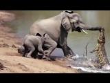 Когда животные спасают других животных.Это надо видеть!