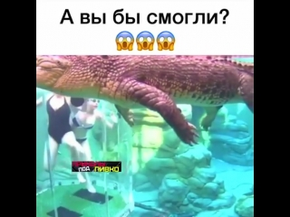 _prikoly_pod_pivko__video_1521557611351.mp4