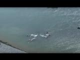 Нападение косаток на кита под Магаданом было снято на видео