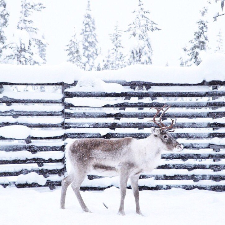 Новый Год на родине Санта-Клауса: прямые рейсы в Финляндию (Хельсинки) всего за 8500 рублей туда-обратно из Москвы