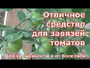 Отличное средство для завязей томатов. От болезней и для урожайности