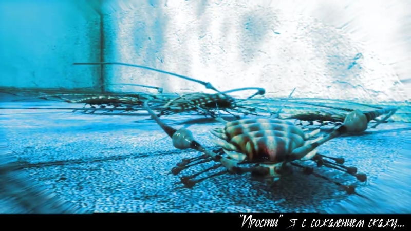 【Hatsune Miku】Bacterial Contamination (RUS Cover)【VOLume】 細菌汚染.mp4