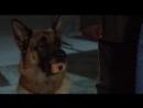 К-9: Собачья работа 3: Частные детективы / K-9: P.I. (2002) [перевод Ю. Живов]