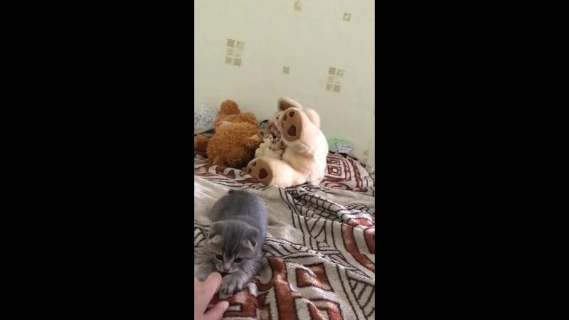 увУ котя