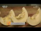 Мускусная тепличная Дыня 京玉352薄皮甜瓜大棚栽培技术。