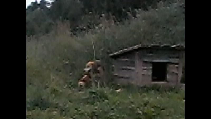 Собачья идиллия!