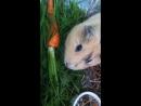 Фрося и морковь с грядки