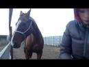 Видео урок по мягкому воспитанию лошадей. Про личное пространство.