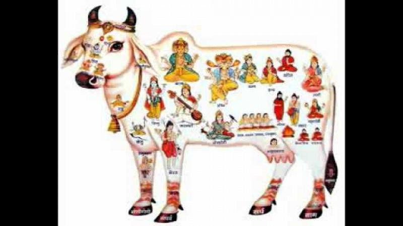 Серебряков С В Азбука успеха Омск 2005 3 Лечение продуктами коровы