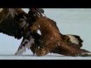 Wild Russia - 1 - Kamchatka (Россия: От Края До Края - Камчатка) - 1/3