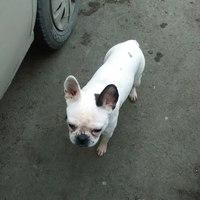 Потерялась собака в районе ст.Пугачево