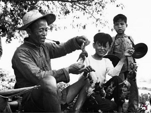 чем закончилось тотальное уничтожение воробьев в китае по инициативе мао цзэдуна, в китае в рамках политики большого скачка (1958—1962) была организована кампании по уничтожению воробьев.