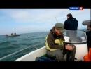диалоги о рыбалке бычок