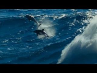 ENIGMA - The Dream of the Dolphin.