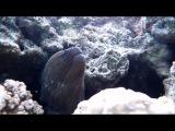 Relax Music From The Depths Of The Ocean | Релакс Музыка из Глубины Океана