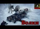 История о том как волки спасли человека