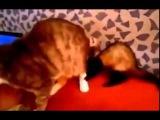 Кот проклинает тот день когда появился харек в семье.))