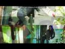 «Со стены Kara Para Ask Грязные деньги и любовь» под музыку Quest Pistols Show ft. MONATIK - Мокрая.