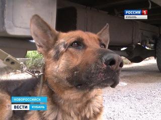 Новые подробности в деле об издевательстве над собакой в Новороссийске