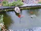 Кошачья рыбалка на льду