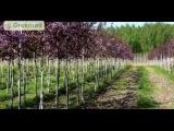 Особенности осенней обрезки плодовых культур