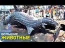Самые большие животные [SLIVKI SHOW]