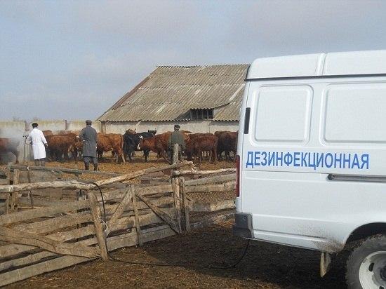 В Ростовской области ветврачи проводят противоклещевые обработки с/х животных