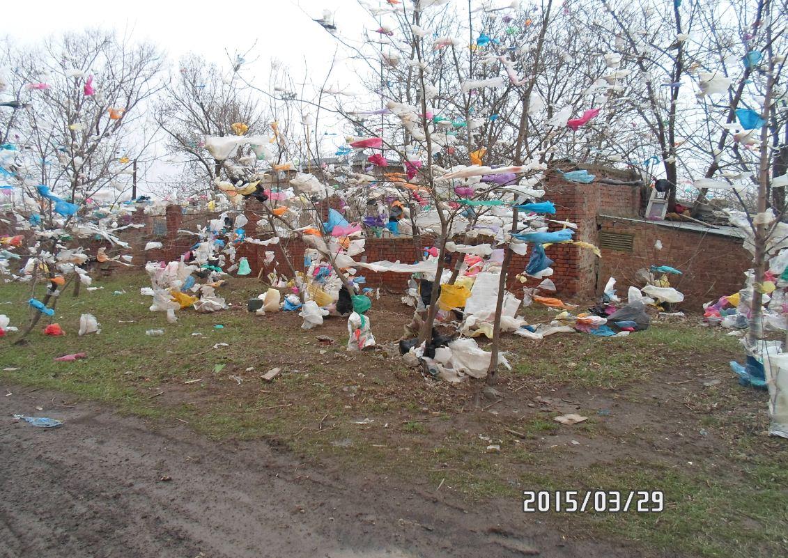 В Таганроге ветер, поваливший десятки деревьев и остановки, не собирается успокаиваться