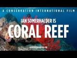 Nature Is Speaking Ian Somerhalder is Coral Reef Conservation International (CI)