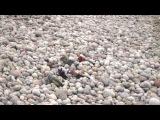 Лилипуты на пляже