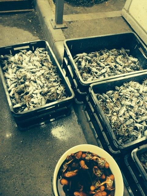 Ветинспекторы задержали больше 100 кг раков на продовольственном рынке в Ростове