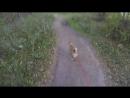 Алиса идет на ДР у костра в лесу