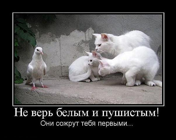 https://pp.vk.me/c623921/v623921574/1aaf/Li6MWDGPg3Y.jpg