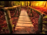 3 Hour Meditation Music Relax Mind Body: Relaxing Music, Meditation Music, Relaxation Music ☯949