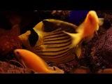 أجمل مناظر المرجان والاسماك في البحر الأح&#16