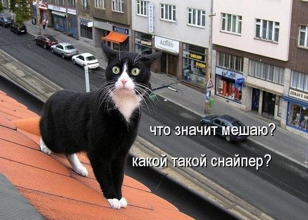http://cs623922.vk.me/v623922632/2fd89/SjpgIgB4fPw.jpg