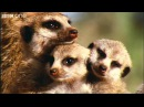 What A Wonderful World With David Attenborough -- BBC One FULL HD