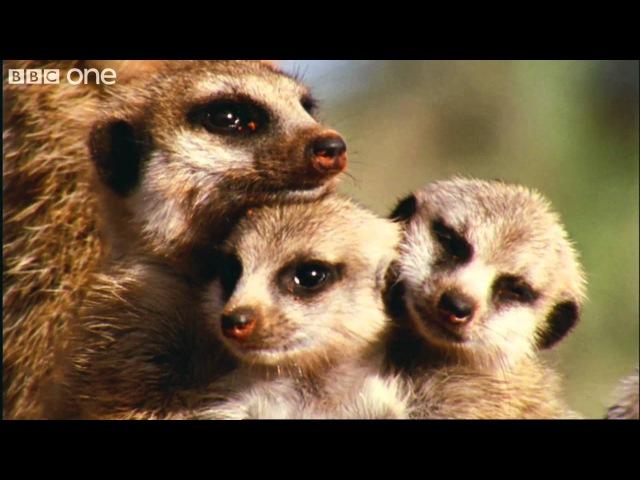 What A Wonderful World With David Attenborough BBC One FULL HD