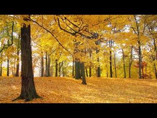 The Beauty Of Autumn. Music - Eugen Doga
