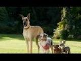 Фильм Мармадюк 2010 смотреть онлайн бесплатно