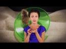 Прокрастинация: привет от внутреннего хомячка Все как у зверей 9