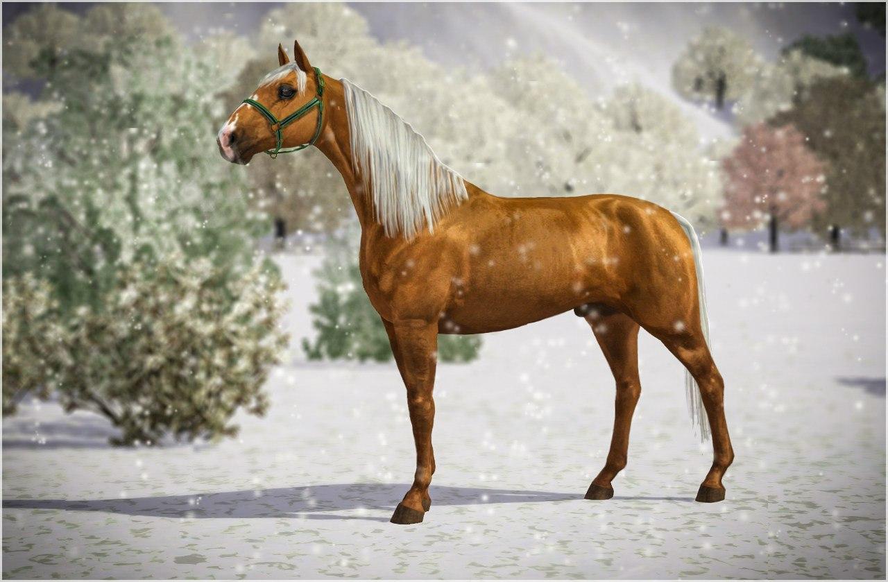 Регистрация лошадей в RHF 2 - Страница 2 L5BWLfBZZnA