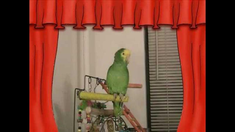 СУПЕР Говорящий попугай Амазон ЮЗИК Super talking parrot on YouTube