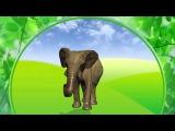 Cтихи о животных для малышей. Лошадь, слон, медведь, тигр.