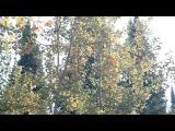 Оркестр Поля Мориа музыка Эннио Морриконе из кф Профессионал (осень 2014 у деревни Зимовьё)