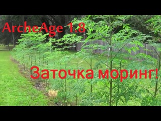 ArcheAge 1.8 Заточка моринг!